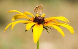 Farfalla, fiore Immagini Stock Libere da Diritti
