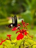 Farfalla in fiore Fotografie Stock Libere da Diritti