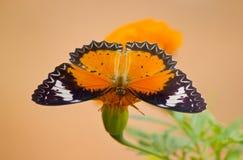 Farfalla in fiore giallo Immagine Stock Libera da Diritti