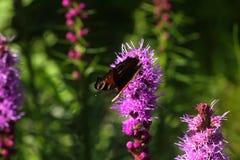 Farfalla Fiore selvaggio Immagine Stock