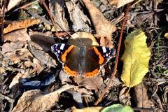 Farfalla, foglie, natura Fotografia Stock Libera da Diritti