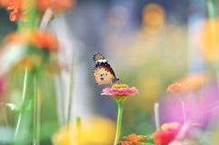 Farfalla fra i fiori variopinti Fotografia Stock Libera da Diritti