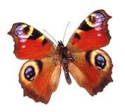 Farfalla fredda Fotografia Stock Libera da Diritti