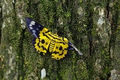 farfalla gialla fotografie stock