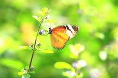 Farfalla gialla sul prato Fotografie Stock Libere da Diritti