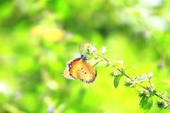 Farfalla gialla sul prato Fotografia Stock Libera da Diritti