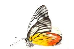 Farfalla giallo arancione Fotografia Stock Libera da Diritti