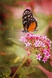 Farfalla graziosa Fotografie Stock Libere da Diritti