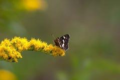 Farfalla il giorno di estate del fiore Fotografia Stock Libera da Diritti