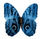 Farfalla isolata Fotografia Stock