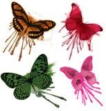 Farfalla isolata Grunge Fotografia Stock Libera da Diritti