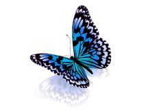 Farfalla. Isolato. Immagine Stock