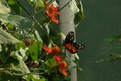 Farfalla in Lincoln Park, Chicago immagini stock libere da diritti
