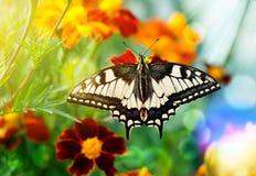 Farfalla luminosa Fotografie Stock Libere da Diritti