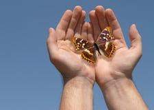 Farfalla in mani Immagini Stock