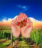 Farfalla in mani, natura fotografia stock