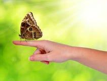 Farfalla Morpho che si siede sulla mano fotografia stock libera da diritti