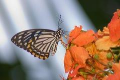 Farfalla in natura Fotografia Stock Libera da Diritti