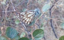 Farfalla nave fotografia stock libera da diritti
