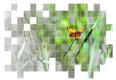 Farfalla nel fondo della natura Fotografia Stock Libera da Diritti
