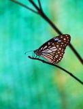 Farfalla nel giardino di fiore Fotografia Stock