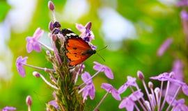 Farfalla nel giardino di fiore Fotografie Stock