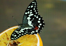 Farfalla nel legno Fotografie Stock Libere da Diritti