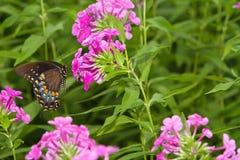 Farfalla nel paesaggio dei fiori Fotografia Stock