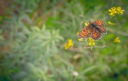 Farfalla nel prato Fondo di estate Immagine Stock Libera da Diritti