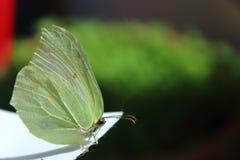 Farfalla nella macro fotografia stock libera da diritti