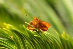 Farfalla nella sosta Fotografia Stock Libera da Diritti