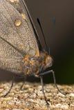 Farfalla nera ed arancio in macro primo piano verticale fotografie stock libere da diritti