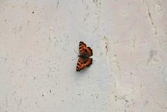 Farfalla nera ed arancio su una parete Fotografia Stock