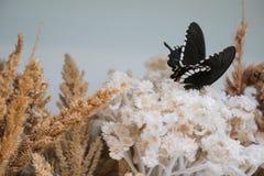 Farfalla nera su dryflower Immagine Stock Libera da Diritti