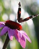 Farfalla a New York fotografia stock libera da diritti
