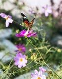 Farfalla parcheggiata in fiore Fotografia Stock