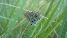 Farfalla piacevole fotografia stock