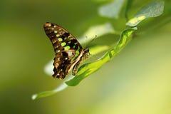 Farfalla piacevole Immagini Stock Libere da Diritti