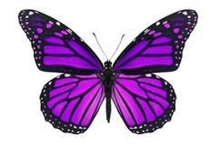 Farfalla porpora Immagini Stock