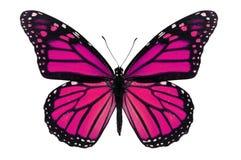 Farfalla rosa Fotografie Stock