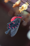 Farfalla rosa del terreno comunale neonato Immagine Stock Libera da Diritti
