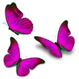 Farfalla rosa tre Fotografia Stock