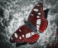 farfalla rossa fotografia stock libera da diritti