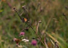 Farfalla seduta sul fiore fotografia stock libera da diritti