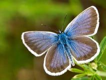 farfalla selvaggia Immagine Stock Libera da Diritti