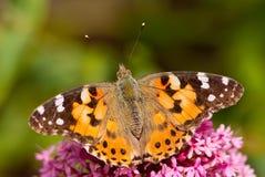 Farfalla - signora verniciata Fotografia Stock Libera da Diritti