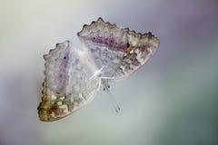 Farfalla sospesa Fotografia Stock