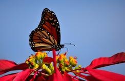 Farfalla, stella di Natale e cielo blu di monarca Immagine Stock Libera da Diritti