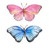 Farfalla stupefacente dell'acquerello Fotografia Stock