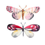 Farfalla stupefacente dell'acquerello Fotografia Stock Libera da Diritti